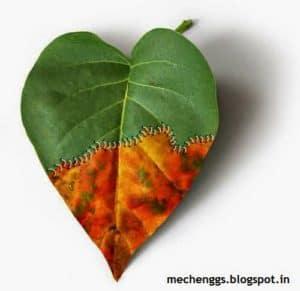 waving of leaf really creative